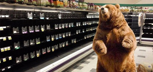 In this photo provided by animal control, a brown bear is seen haunting a dairy aisle in the shuttered Sweetbay at Four Corners.