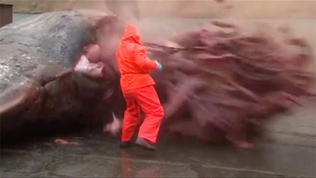 Exploding sperm whale in taiwan