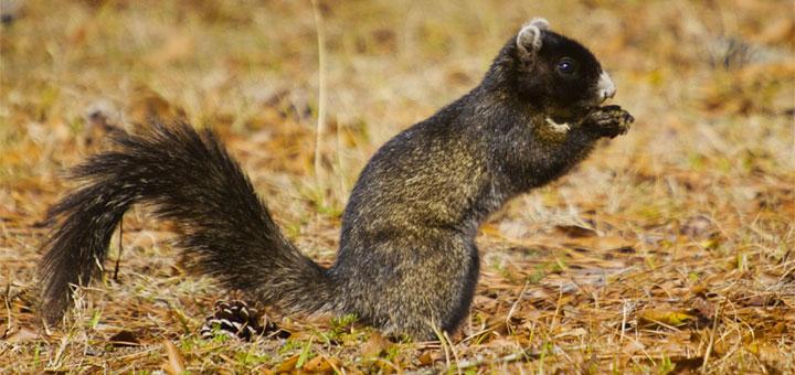 1foxsquirrel