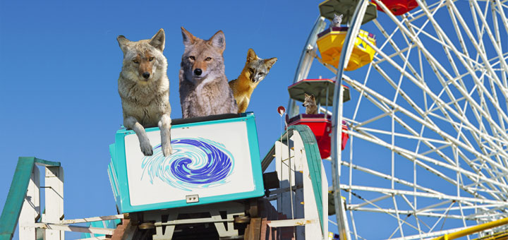 coyote_takeover